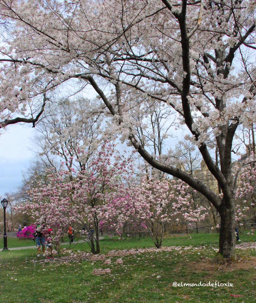 magnolias2