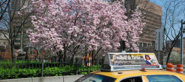Magnolias en NY